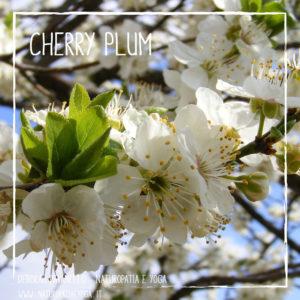 fioridibach-cherry-plum