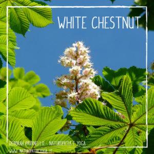 fioridibach-white-chestnut