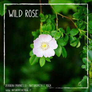 fioridibach-wild-rose